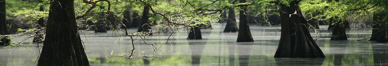 Gulf Coastal Plains and Ozarks Landscape Conservation Cooperative
