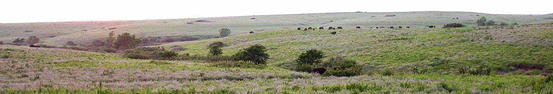 Great Plains Landscape Conservation Cooperative